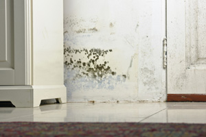 Mold testing and inspection services from Pittsburgh's experts